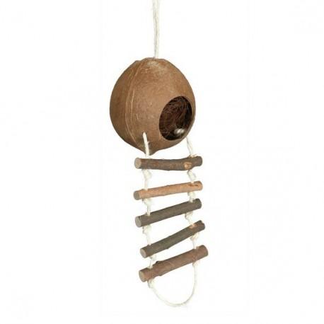 Kokosnoot met ladder